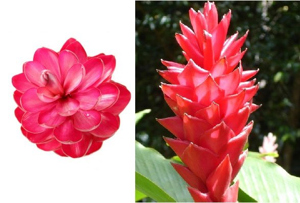 Tại sao đa số các loài hoa đều có tính đối xứng?