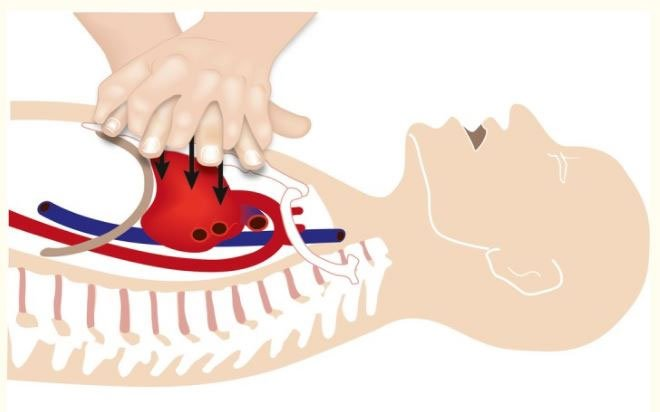 Tại sao ép tim thổi ngạt có thể làm cơ thể tuần hoàn trở lại?
