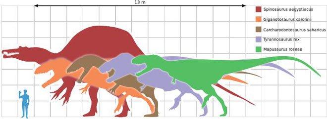 Tại sao khủng long thống trị Trái đất hơn 100 triệu năm lại không sinh ra trí tuệ như loài người?