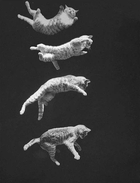 Tại sao mèo có thể ngã từ tầng 32 xuống đất mà vẫn sống sót?