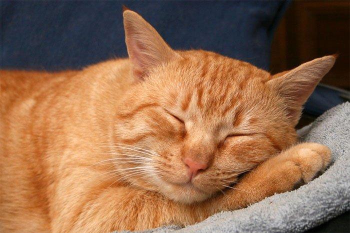 Tại sao một số động vật lại ngủ quá nhiều?