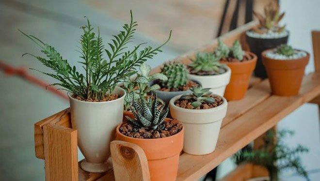 Tại sao một số loại cây trồng được trong phòng ngủ, số khác lại không?