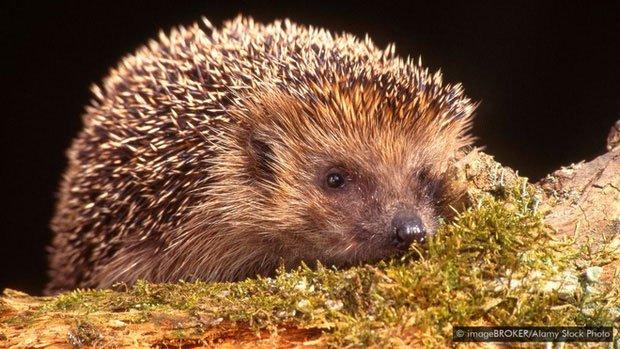 Tại sao một số loài động vật sở hữu nọc có độc tính cao đến mức chính chúng cũng không dùng được?