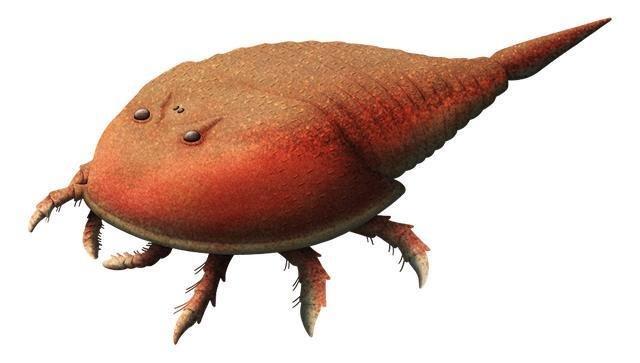 Tại sao một số sinh vật trở thành hóa thạch sống?