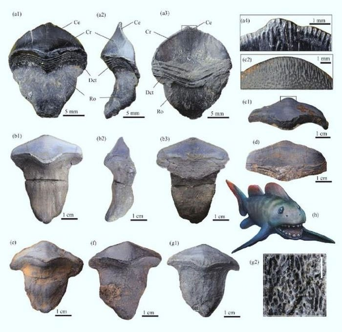 Tái sinh quái ngư răng cánh hoa 290 triệu tuổi, tổ tiên bóng ma đại dương