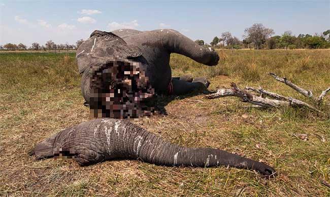 Tấm hình bóc trần sự tàn nhẫn của nạn săn trộm thú hiếm