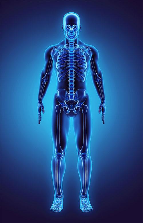 Tế bào gốc trong xương người có thể tự làm mới