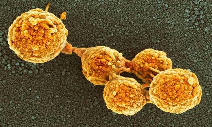Tế bào nhân tạo hoạt động giống tế bào thật