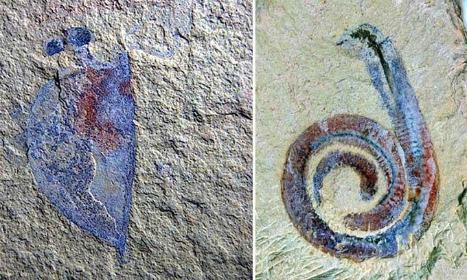Thảm họa bí ẩn biến vườn ươm thành nghĩa địa 500 triệu năm trước