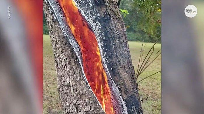 Thân cây tách đôi bốc cháy từ bên trong