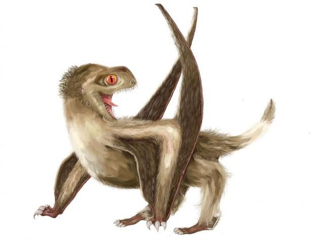 Thằn lằn bay có thể có lông