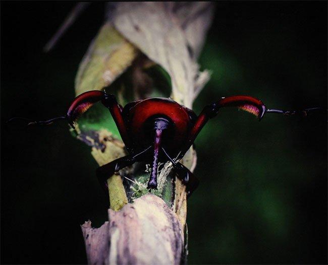 Thế giới côn trùng Việt Nam đẹp lộng lẫy qua mắt nhiếp ảnh gia Ý