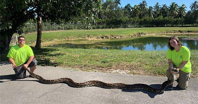 Thợ săn Florida bắt trăn Miến Điện dài gần 6 mét