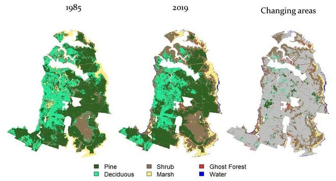 Thứ gì đó đang giết chết cây cối, biến những khu rừng ở bờ đông nước Mỹ thành rừng ma