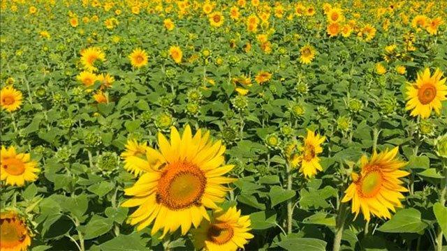 Thực vật cũng thức dậy khi trời sáng giống như con người