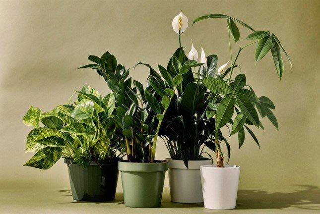 Thực vật thở như thế nào?