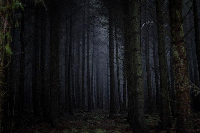 Thuyết Khu rừng đen tối và tại sao chúng ta vẫn chưa tìm thấy người ngoài hành tinh