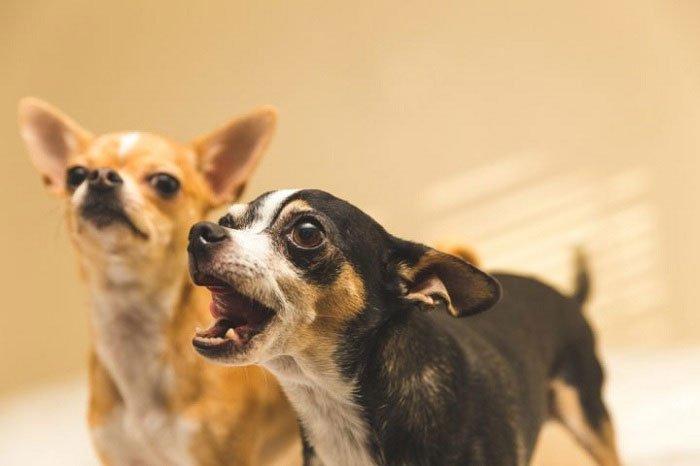 Tiếng chó sủa có ý nghĩa gì?