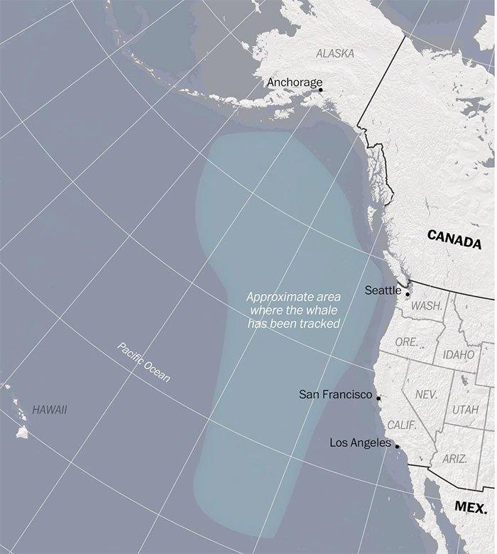 Tiếng vọng từ đại dương: Bí ẩn khiến giới khoa học không thể giải mã suốt gần 3 thập kỷ