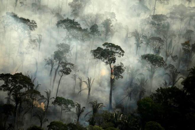 Tiết lộ gây sốc: Cứ 6 giây, một khu rừng mưa nguyên sinh lớn ngang sân bóng bị phá hủy