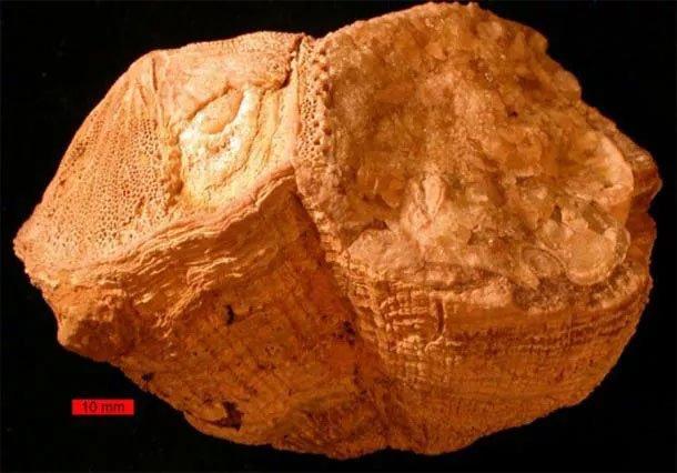 Tiết lộ sốc từ sinh vật lạ 70 triệu tuổi: Trái đất từng quay khác hiện tại