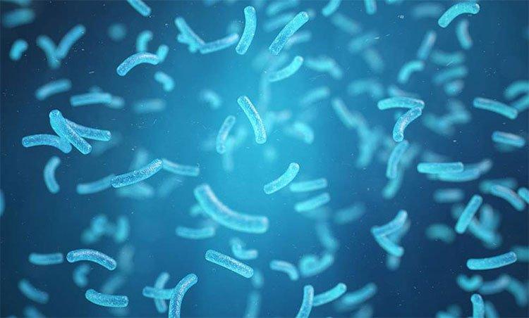 """Tìm ra vi khuẩn """"ăn ô nhiễm"""", phát ra điện"""