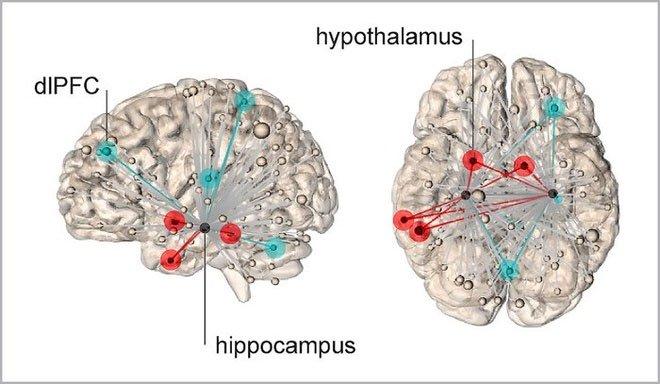 Tìm ra vị trí stress trú ẩn trong bộ não