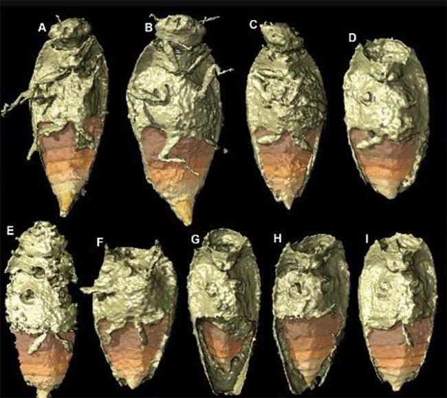 Tìm thấy báu vật hiếm có trong hóa thạch phân khủng long