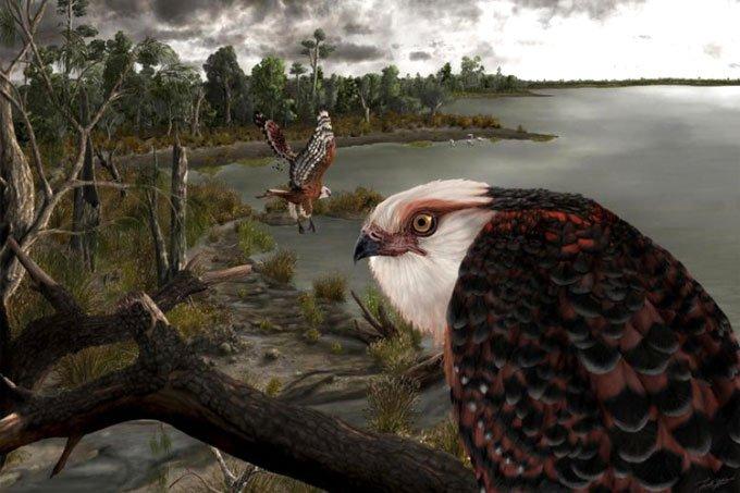 Tìm thấy hóa thạch loài đại bàng ngự trị bầu trời 25 triệu năm trước