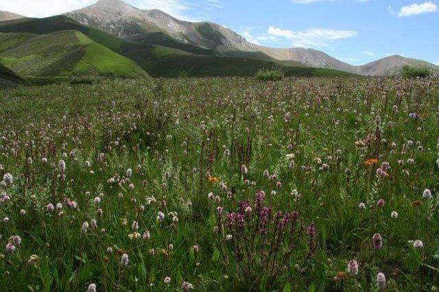 Tìm thấy nơi có nhiều loài hoa lâu đời nhất thế giới