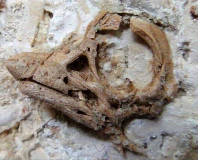 Tìm thấy phôi thai khủng long gần như nguyên vẹn