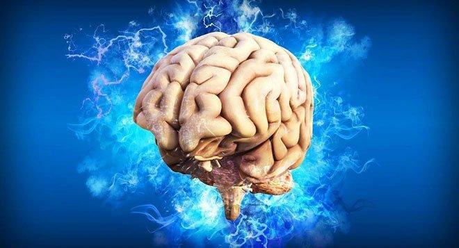 Tìm thấy tế bào thời gian trong não người
