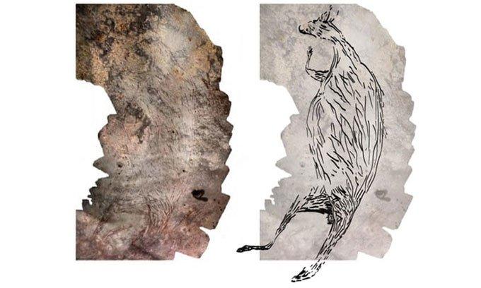 Tìm thấy tranh vẽ kangaroo cổ xưa nhất Australia