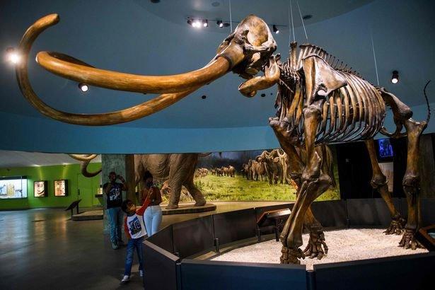Tìm thấy xương voi ma mút khổng lồ 100.000 năm tuổi, nặng 90kg ở Mỹ