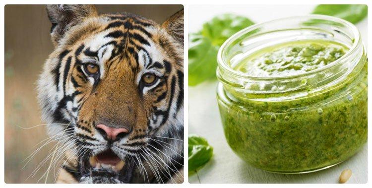 Tin được không: Mỳ ăn liền và kem vani có thể làm động vật tuyệt chủng!