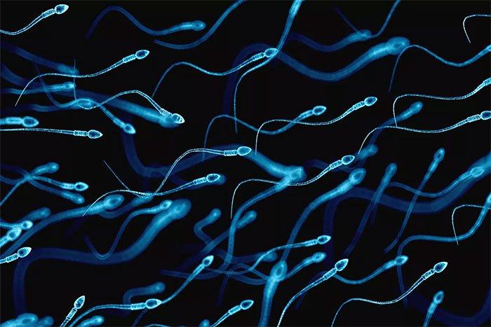 Tinh trùng đạt chất lượng hoàn hảo nhất trong ngày là vào lúc nào?