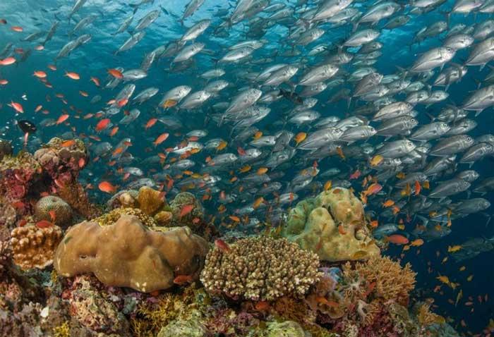 Toàn bộ hệ sinh thái có thể bị tuyệt chủng đột ngột trong thập kỷ này?