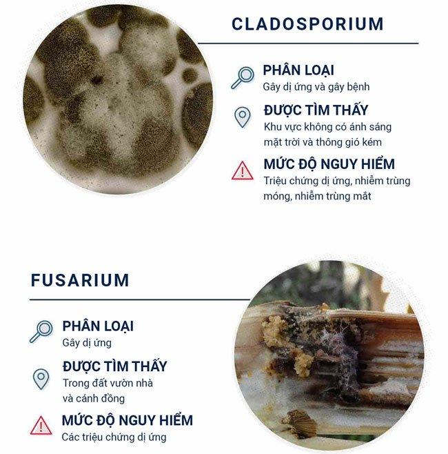 Top 12 loại nấm mốc thường thấy trong nhà và mức độ nguy hiểm của chúng