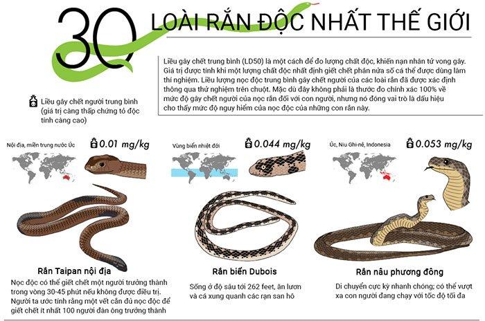 Top 30 loài rắn độc nhất trên thế giới