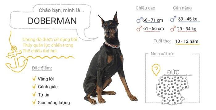 Top 50 giống chó phổ biến nhất thế giới