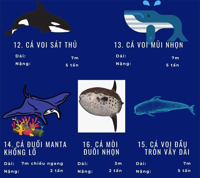 Top 72 loài động vật biển lớn nhất thế giới