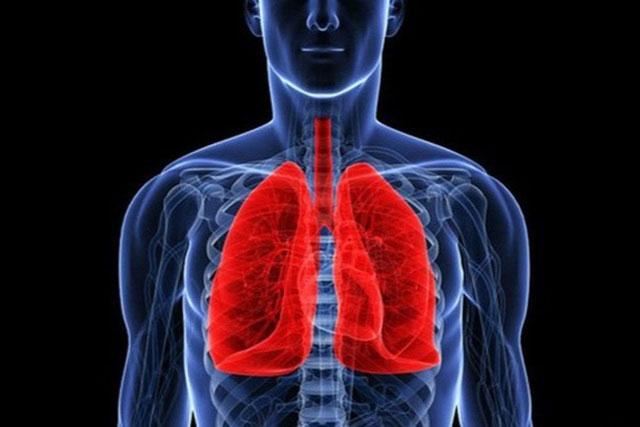 Top 8 điều chưa biết về phổi ở người và động vật