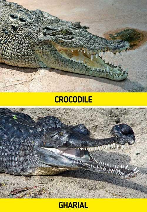 Top 8 loài vật có vẻ ngoài lừa đảo nhất: Trông nguy hiểm mà hiền khô, bất ngờ nhất là loài cuối cùng