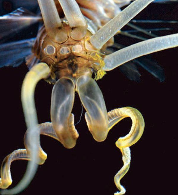 Top động vật lạ độc đáng sợ, chỉ ước không có trên Trái đất