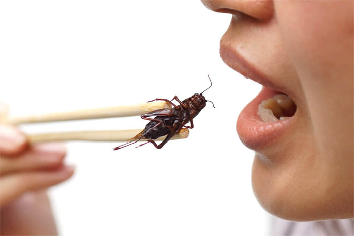 Trang trại nuôi côn trùng làm... đồ ăn vặt