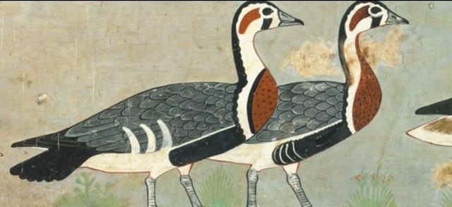 Tranh Ai Cập 4.600 năm tiết lộ loài ngỗng chưa từng được biết