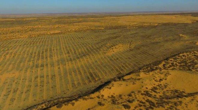 Trồng cây trên sa mạc là tốt hay xấu?