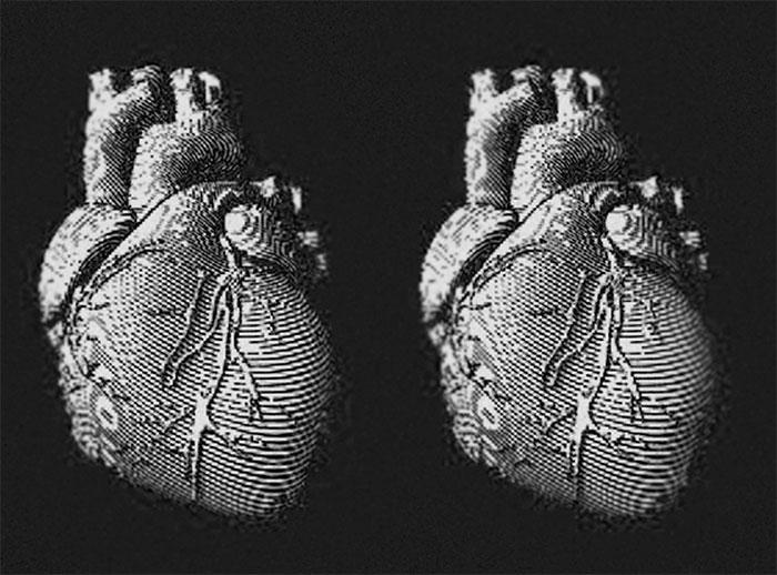 Trong tương lại, chúng ta có thể tái tạo tim người từ hải quỳ