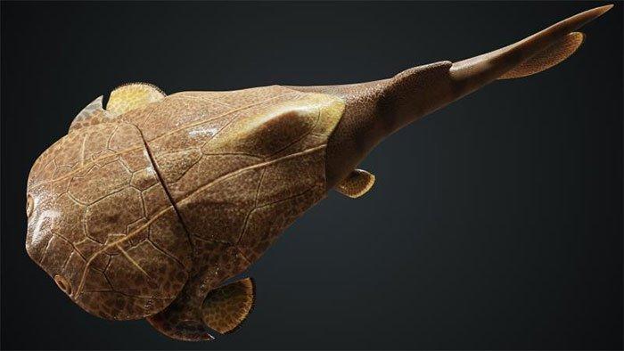 Trung Quốc phát hiện dấu tích loài cá da cứng như áo giáp, có họ hàng ở Việt Nam