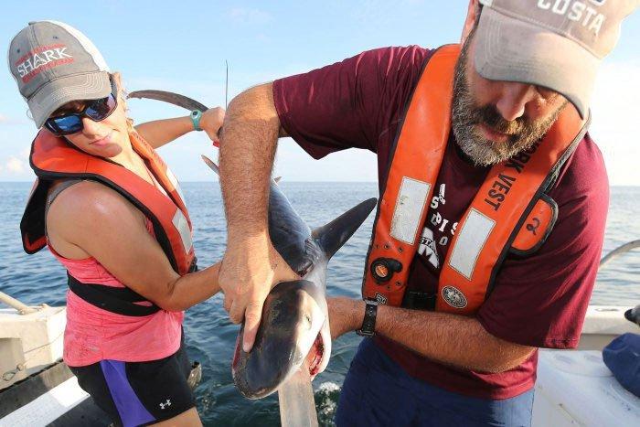 Từ bãi nôn của cá mập, khoa học phát hiện chúng ăn một loại mồi không ai nghĩ đến